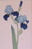 Botanical Painting. Iris by Olga Makrushenko at The Westcliffe Gallery, Sheringham